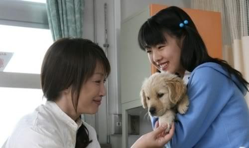 Cảnh trong phim 10 lời hứa với chú chó của tôi - 2