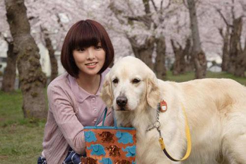 Cảnh trong phim 10 lời hứa với chú chó của tôi - 3
